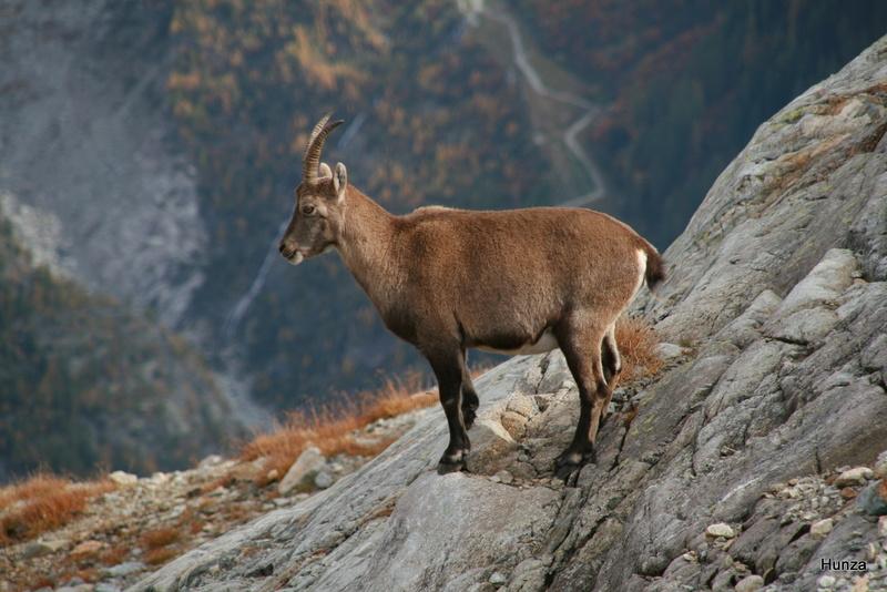 Découvrir les plus beaux endroits de la vallée de Chamonix Mont-Blanc Bouque10