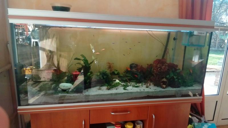 Présentation de l'aquarium - Page 2 14874110
