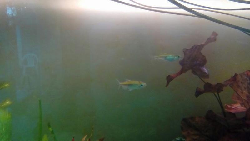 Présentation de l'aquarium - Page 2 14905510