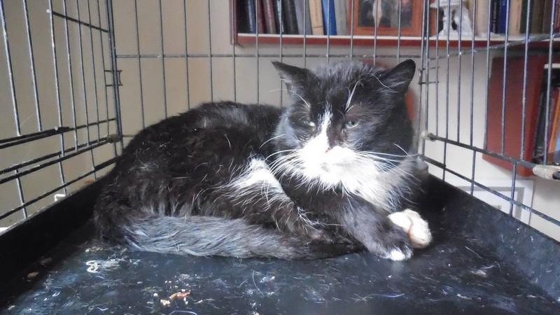 """Мини-приют квартирного типа """"Тимошка"""" для болеющих бродячих кошек Dscn0710"""