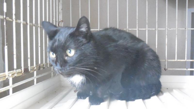 """Мини-приют квартирного типа """"Тимошка"""" для болеющих бродячих кошек Dscn0711"""
