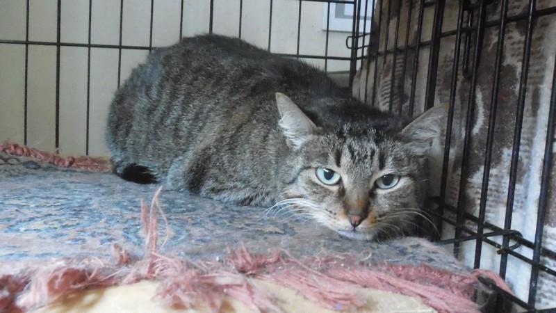 """Мини-приют квартирного типа """"Тимошка"""" для болеющих бродячих кошек Dscn0712"""