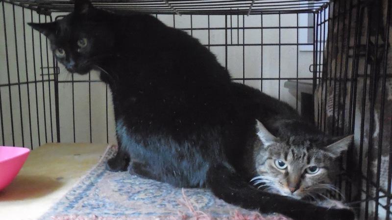 """Мини-приют квартирного типа """"Тимошка"""" для болеющих бродячих кошек Dscn0713"""