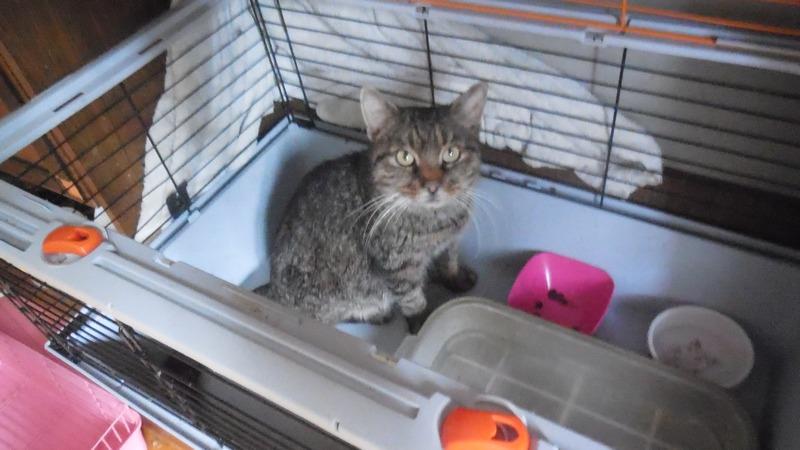 """Мини-приют квартирного типа """"Тимошка"""" для болеющих бродячих кошек Dscn0715"""