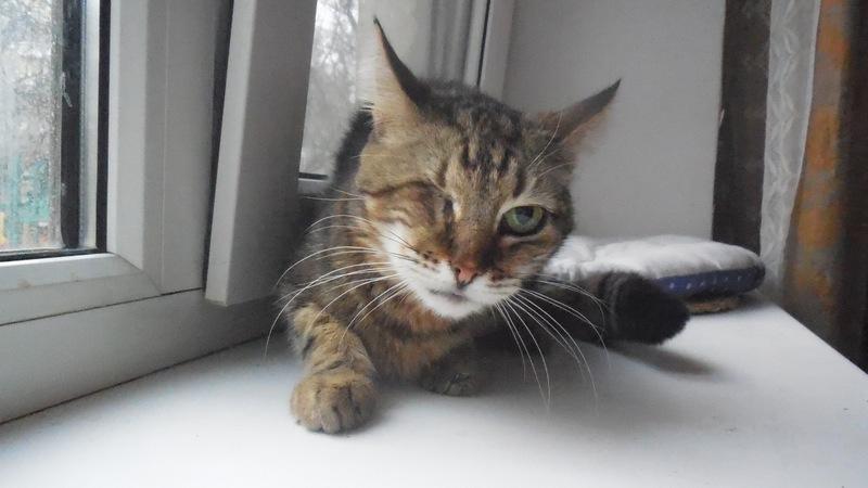 """Мини-приют квартирного типа """"Тимошка"""" для болеющих бродячих кошек Dscn0716"""