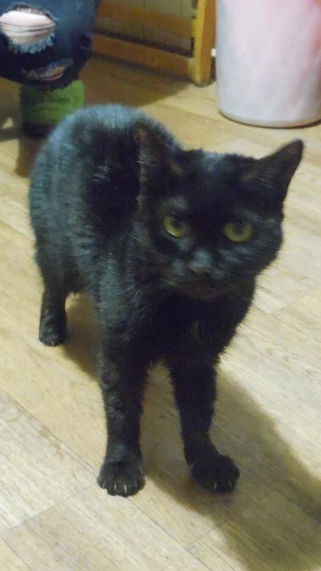 """Мини-приют квартирного типа """"Тимошка"""" для болеющих бродячих кошек Dscn0718"""