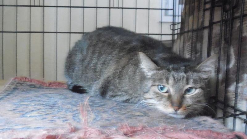 """Мини-приют квартирного типа """"Тимошка"""" для болеющих бродячих кошек Dscn0719"""