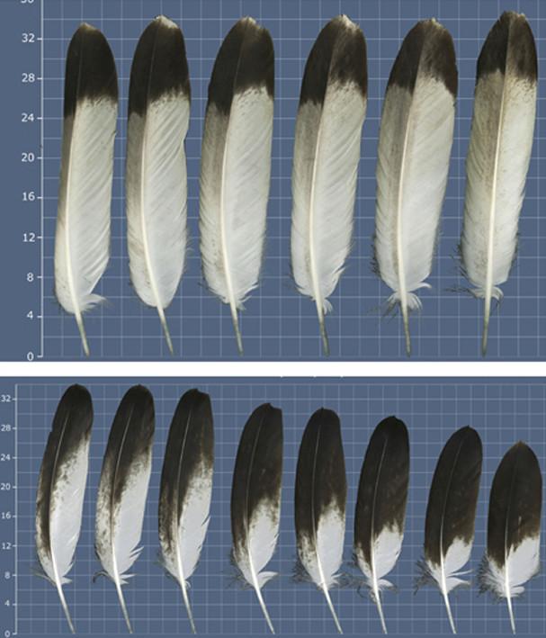 Buste Jicarilla Apache, un classique revisité (Fini !!!) - Page 2 Edan_316