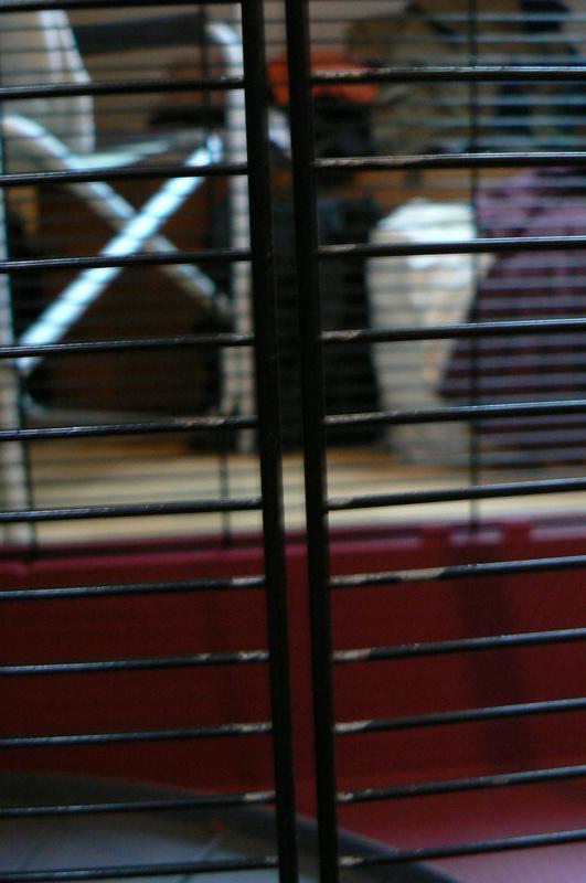Rouille sur cage d'occasion P1000812