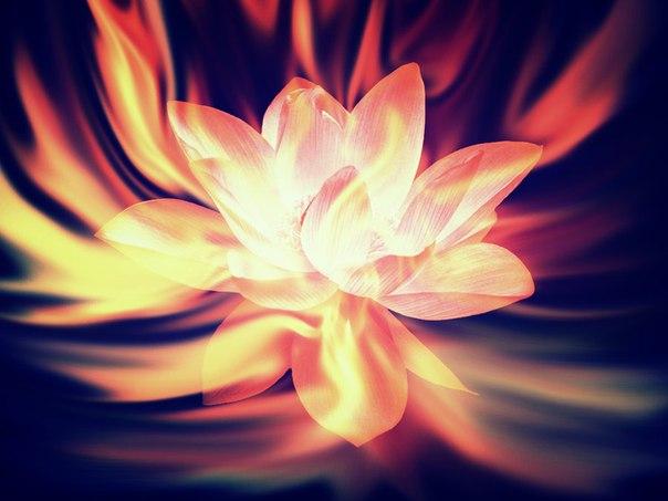Огненные Цветы 894911