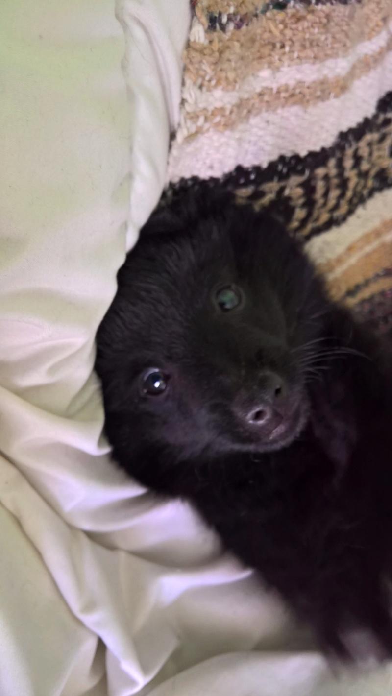 Les tribulations d'un petit loup noir. Wp_20111