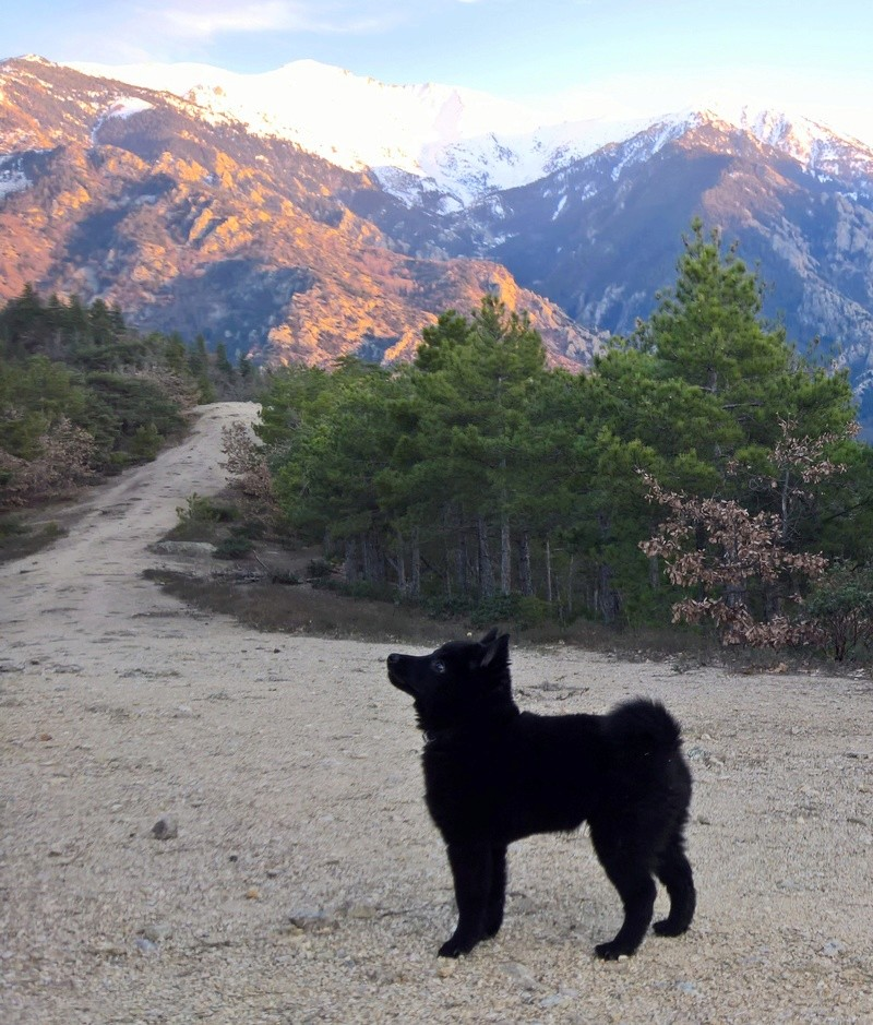 Les tribulations d'un petit loup noir. Wp_20112