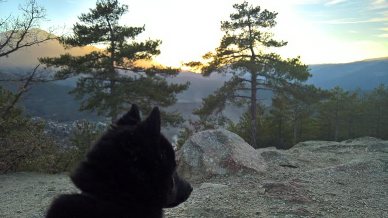Les tribulations d'un petit loup noir. Wp_20115
