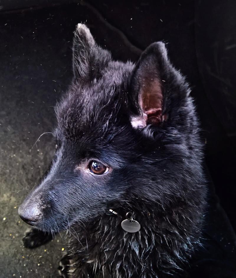 Les tribulations d'un petit loup noir. Wp_20116