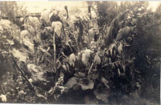 L'affaire de l'Amarante - Page 3 Plants10
