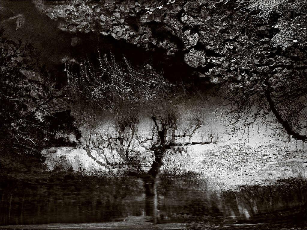 """"""" L'arbre """" Arbre_10"""