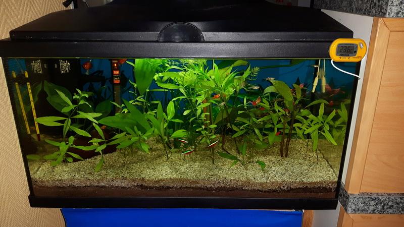 Problème d'algues dans mon bac 60l.je demande de l'aide svp 20170214
