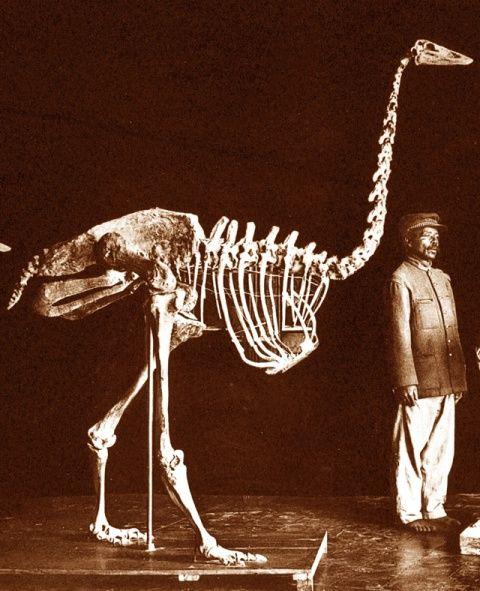 Les animaux disparus-espèces éteintes du fait de l'homme et son mode de vie 1b157d10