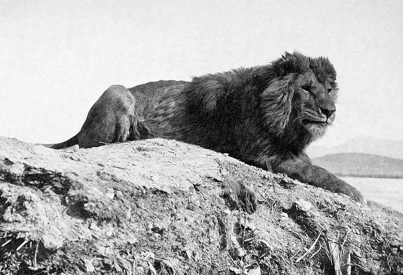 Les animaux disparus-espèces éteintes du fait de l'homme et son mode de vie Barbar10