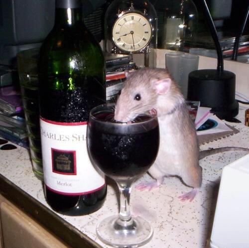 Notre ami raton Cirxjj10