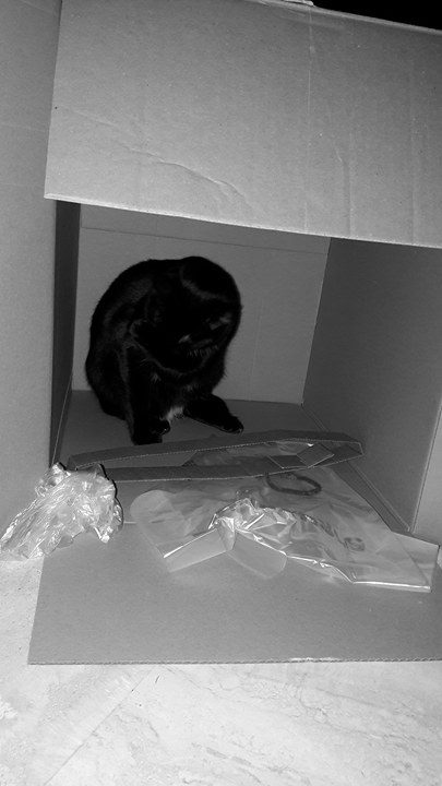 Lorette-chatonne noire et blanche-née le 10/10/2015 16901510