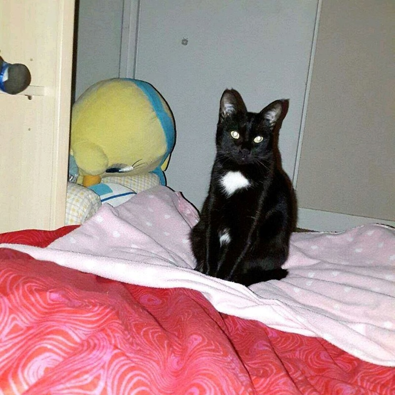 Lorette-chatonne noire et blanche-née le 10/10/2015 16934210