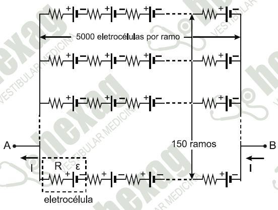 Força eletromotriz- peixe poraquê Peixe10