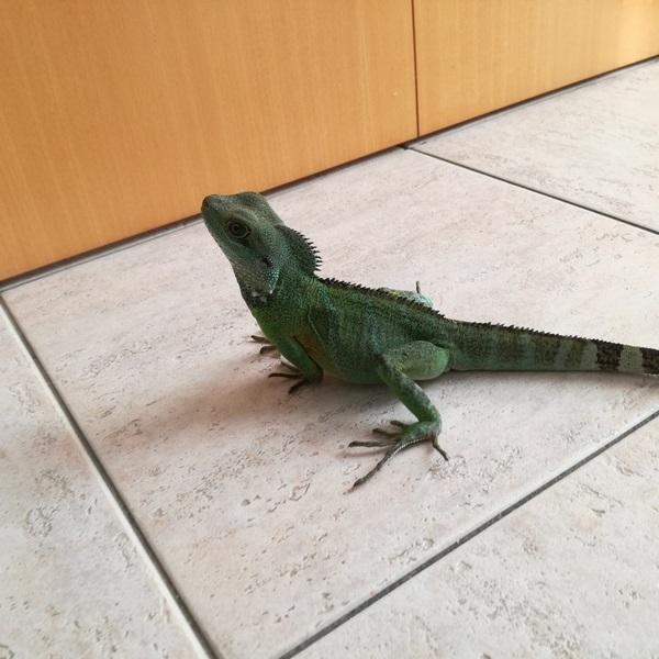 sexe dragons d eau Grand_12