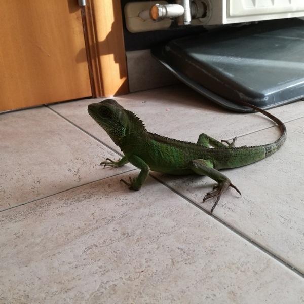 sexe dragons d eau Petit_11