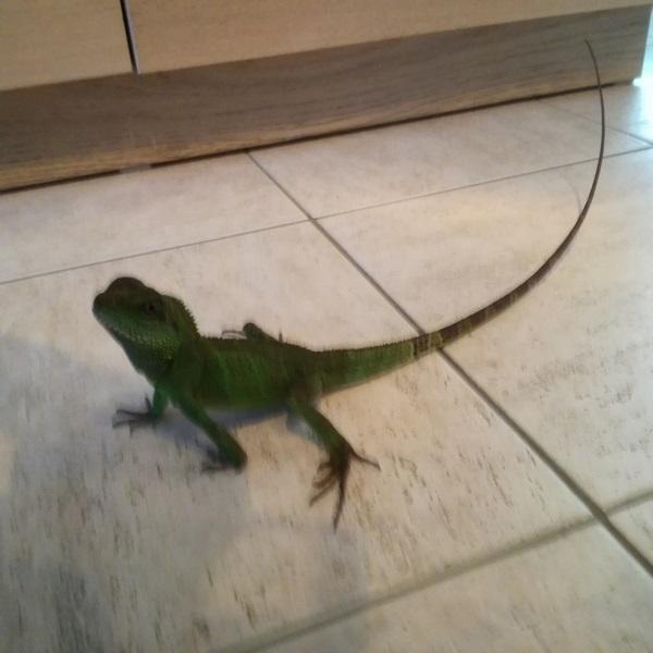 sexe dragons d eau Petit_12