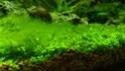 identification algue Img_2020