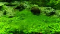 identification algue Img_2021