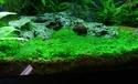 identification algue Sans_t12