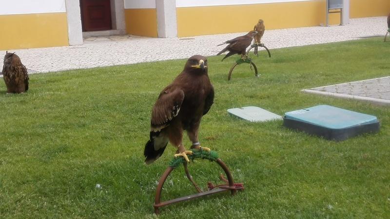 **Falcoaria Real  14-05-2017** Img_2033