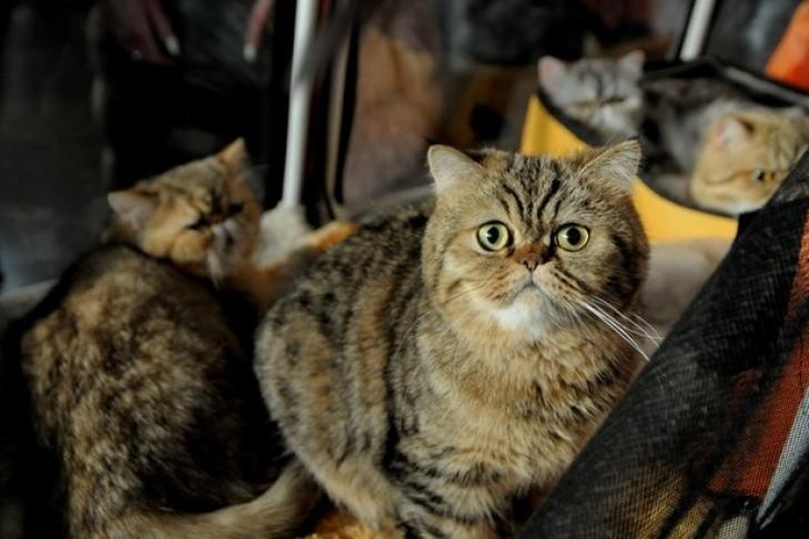 Типичный кот - Страница 2 110