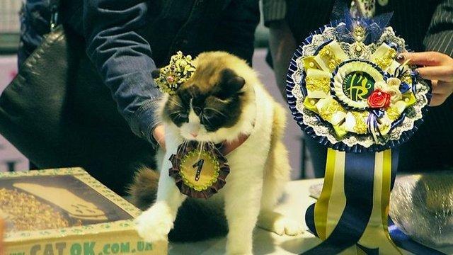 Типичный кот - Страница 2 310