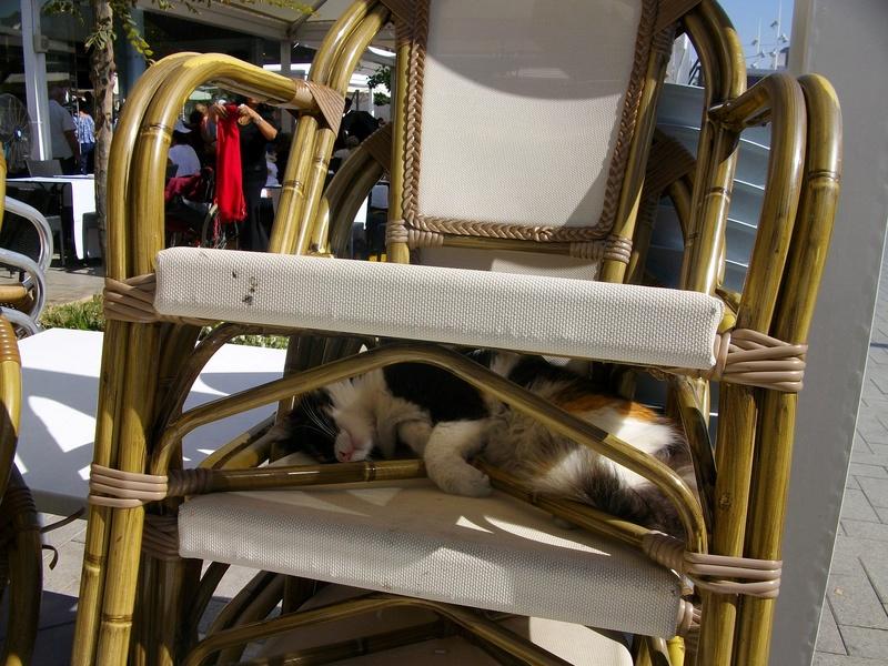 Типичный кот - Страница 2 Ai10