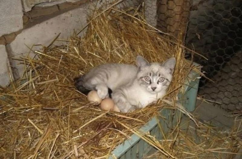 Типичный кот - Страница 2 Ai11