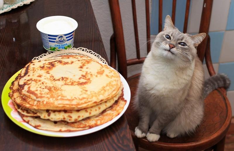 Типичный кот - Страница 2 Iezzao10