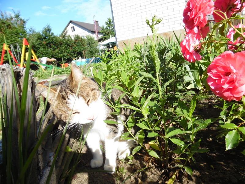 Типичный кот - Страница 3 Sam_1610