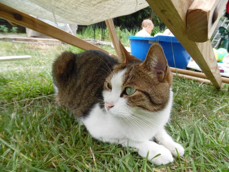Типичный кот - Страница 3 Sam_1611