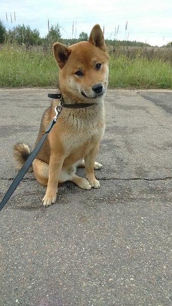 Прошу оценить щенка - Страница 2 Jnwo7a10