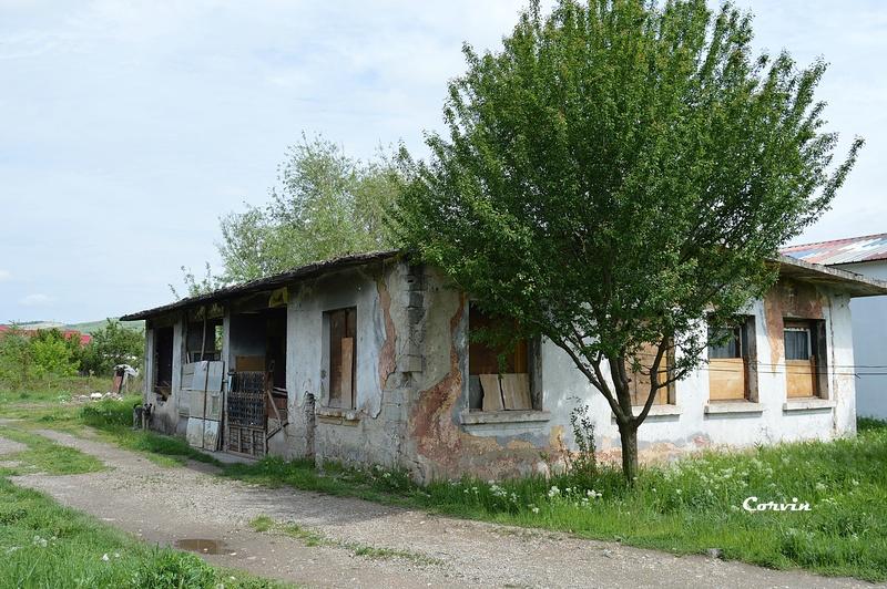 CFI Hunedoara-Govăjdia-Retișoara Dsc_0173