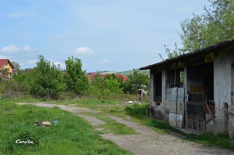CFI Hunedoara-Govăjdia-Retișoara Dsc_0174