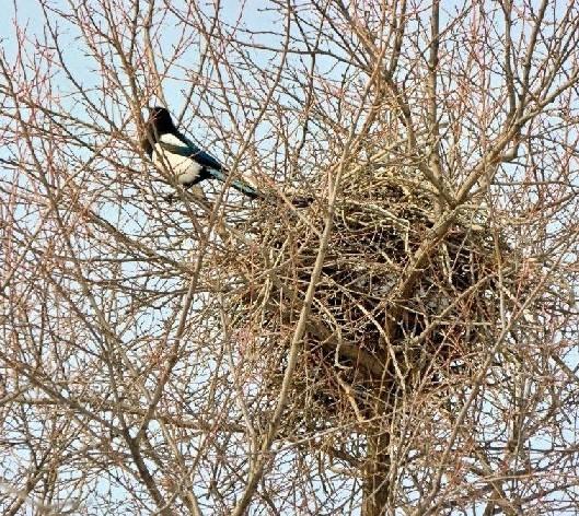 Обряд на сорочье гнездо Brp-yd10