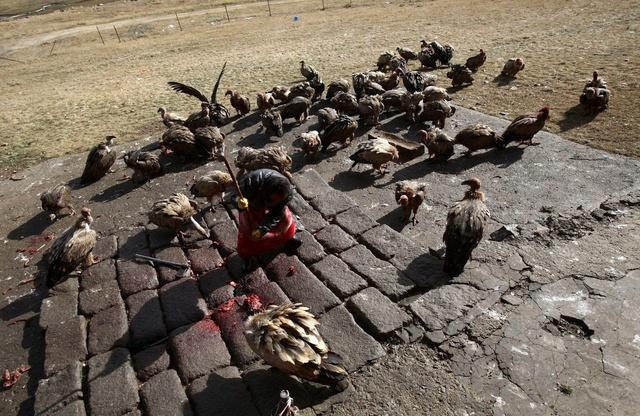 Небесное погребение в Тибете Ogc9bl10