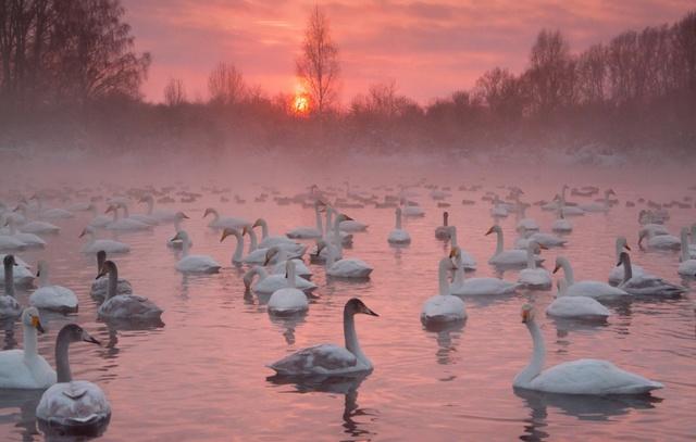 Первый в Москве парк водоплавающих птиц создадут на севере города 4c1c2b10