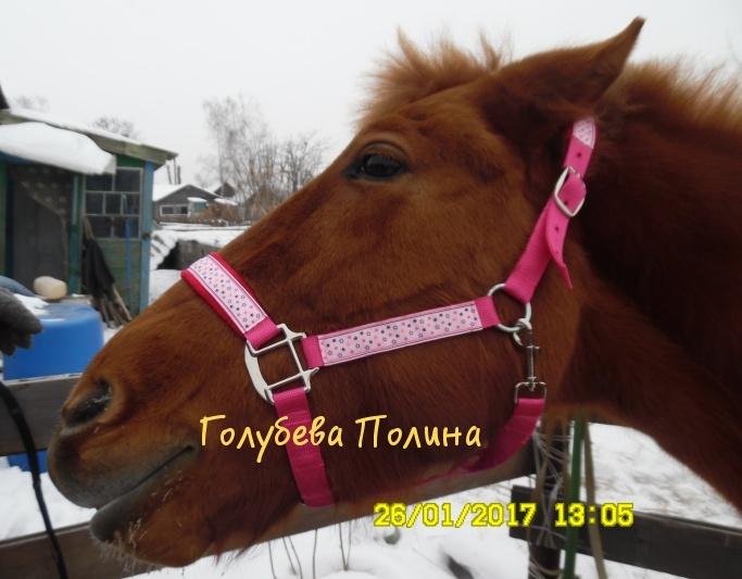 Мастерская вальтрапов Полины Голубевой Sam_7210