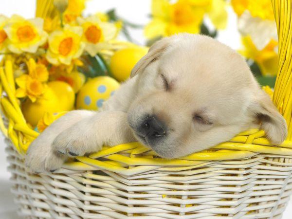 BaDoGood плохая-хорошая собака - Портал 2fons_10