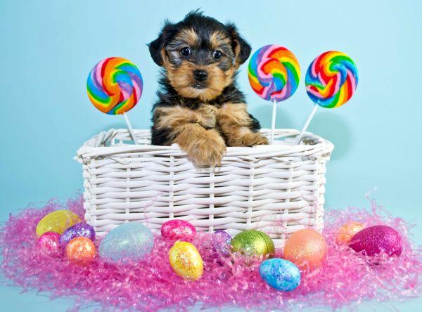 BaDoGood плохая-хорошая собака - Портал Bigsto10